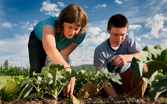 Montana Academy Garden