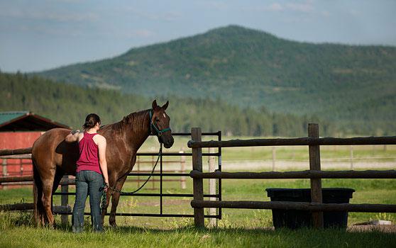 Montana Academy Horse