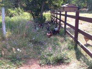 Boulder Creek 7